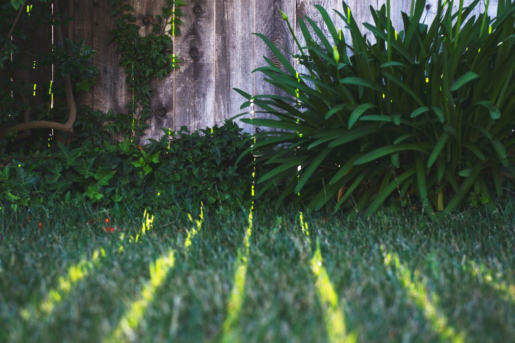 Grass in the garden
